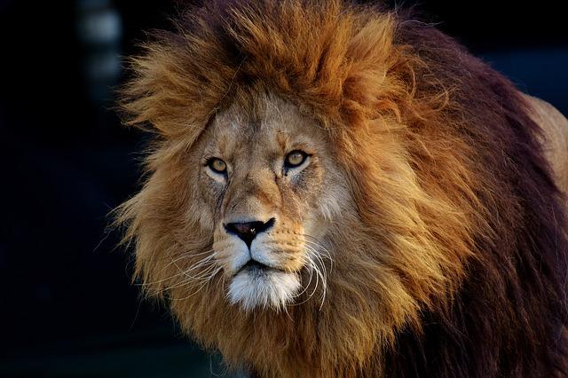 【使えるフランス語表現】manger un lion