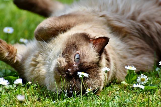 【フランス語】donner sa langue au chat