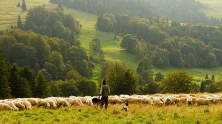 【フランス語表現】mouton  à cinq pattes