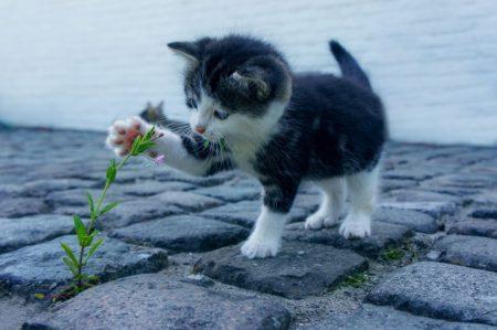 【フランス語表現】Quand le chat n'est pas la les souris dansent